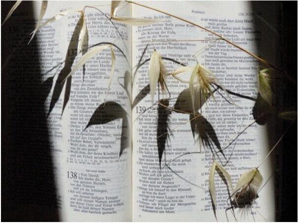 Mit Psalmen unterwegs |  © Rita Pürro