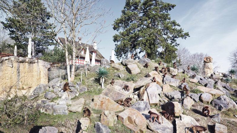 Heute: Zoo am Zürichberg | © Amt für Städtebau Zürich