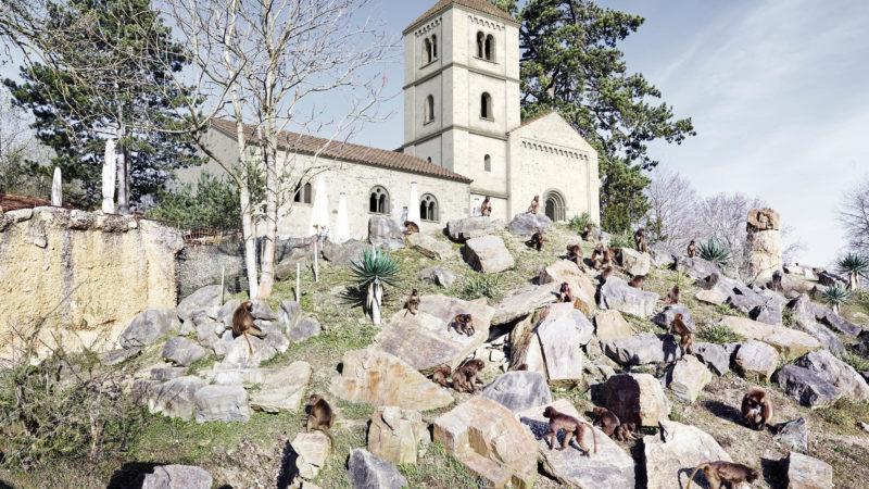 Die Martinskirche stünde heute im Zoo Zürich. | © Amt für Städtebau Zürich